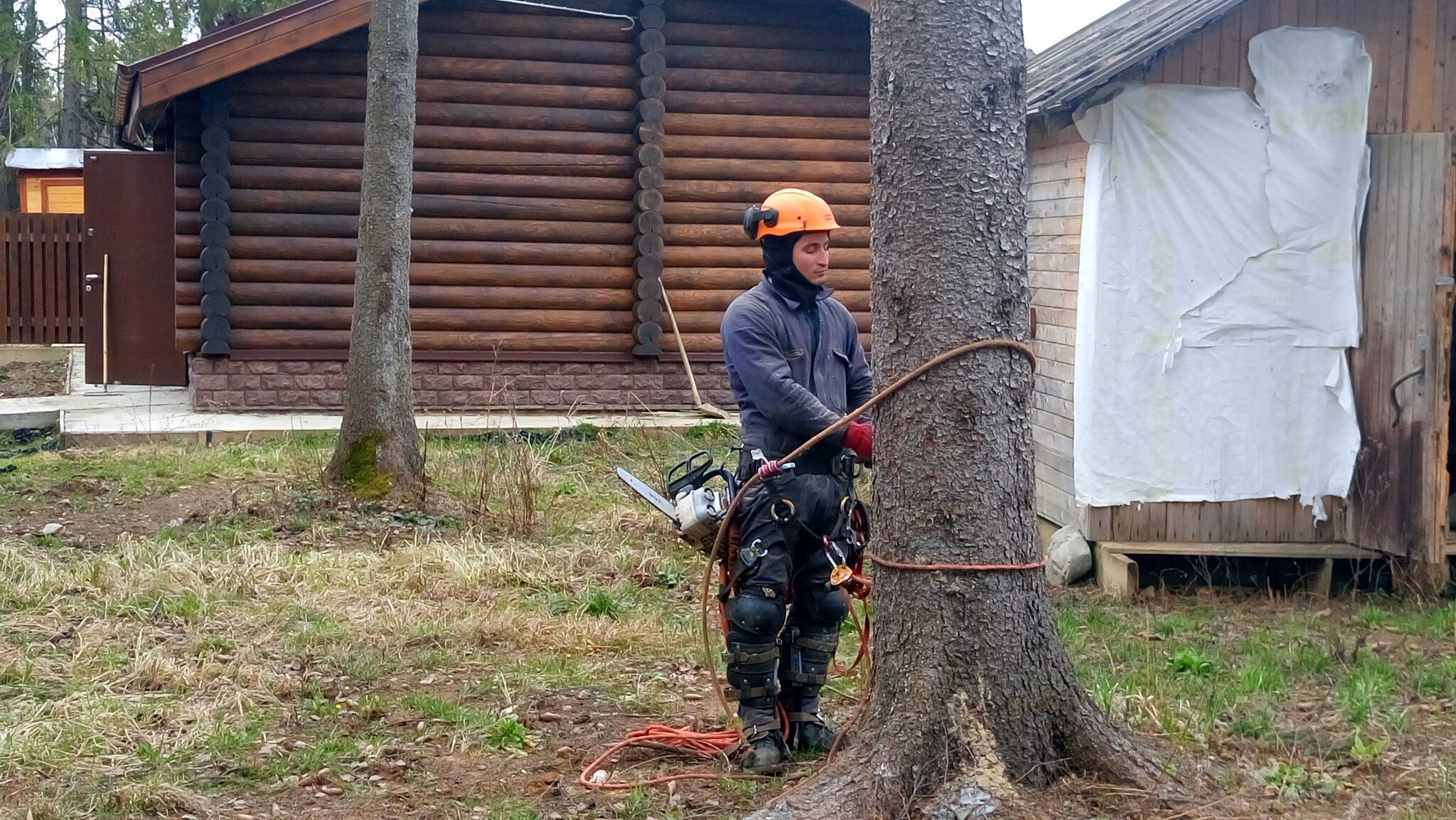 Удаление деревьев в коттеджном поселке Домик в лесу, Дмитровский район, московская область