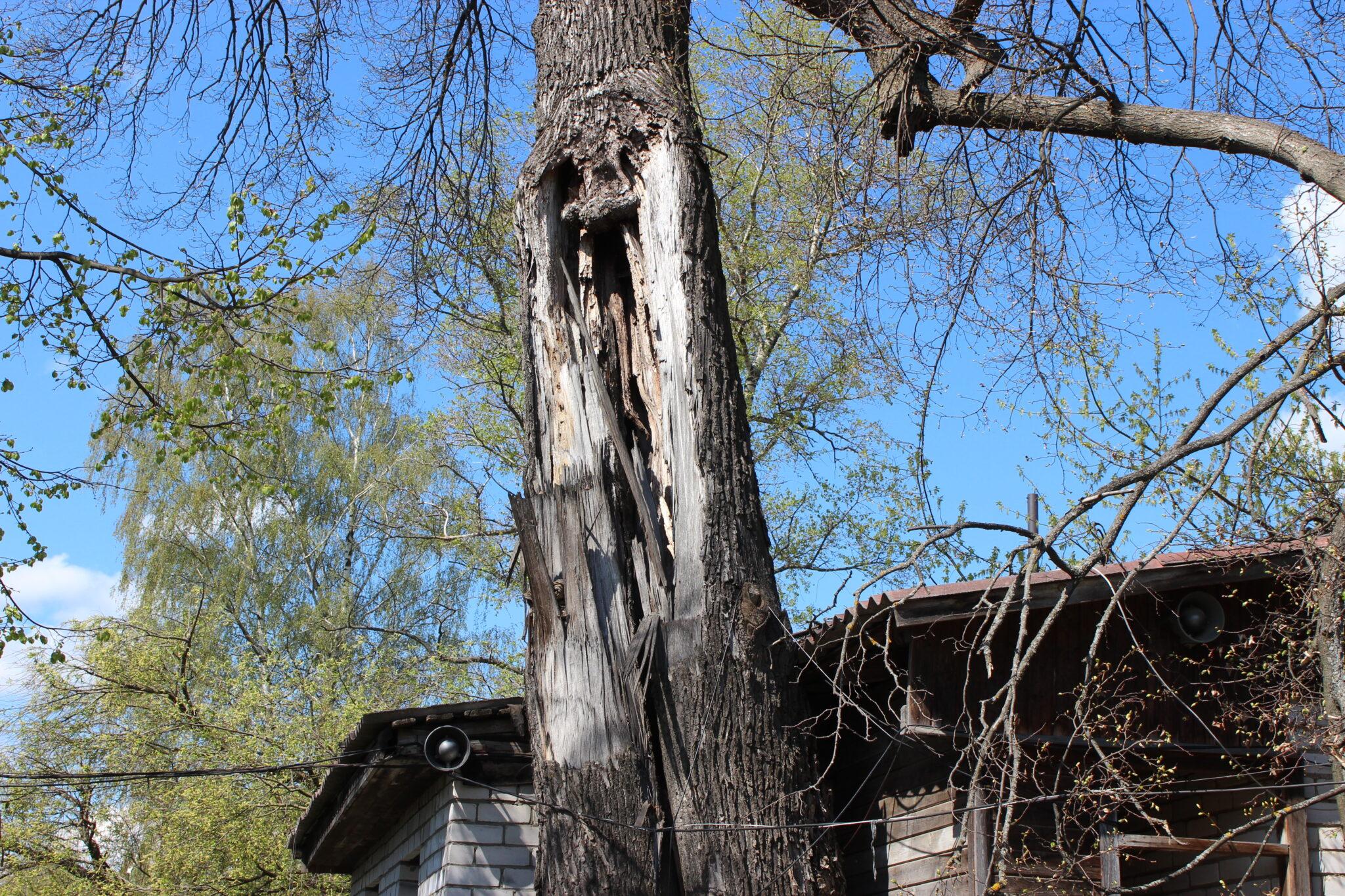 Удаление старого аварийного дерева (вековой липы) и разбор завалов после урагана в Сергиевом Посаде Московской области