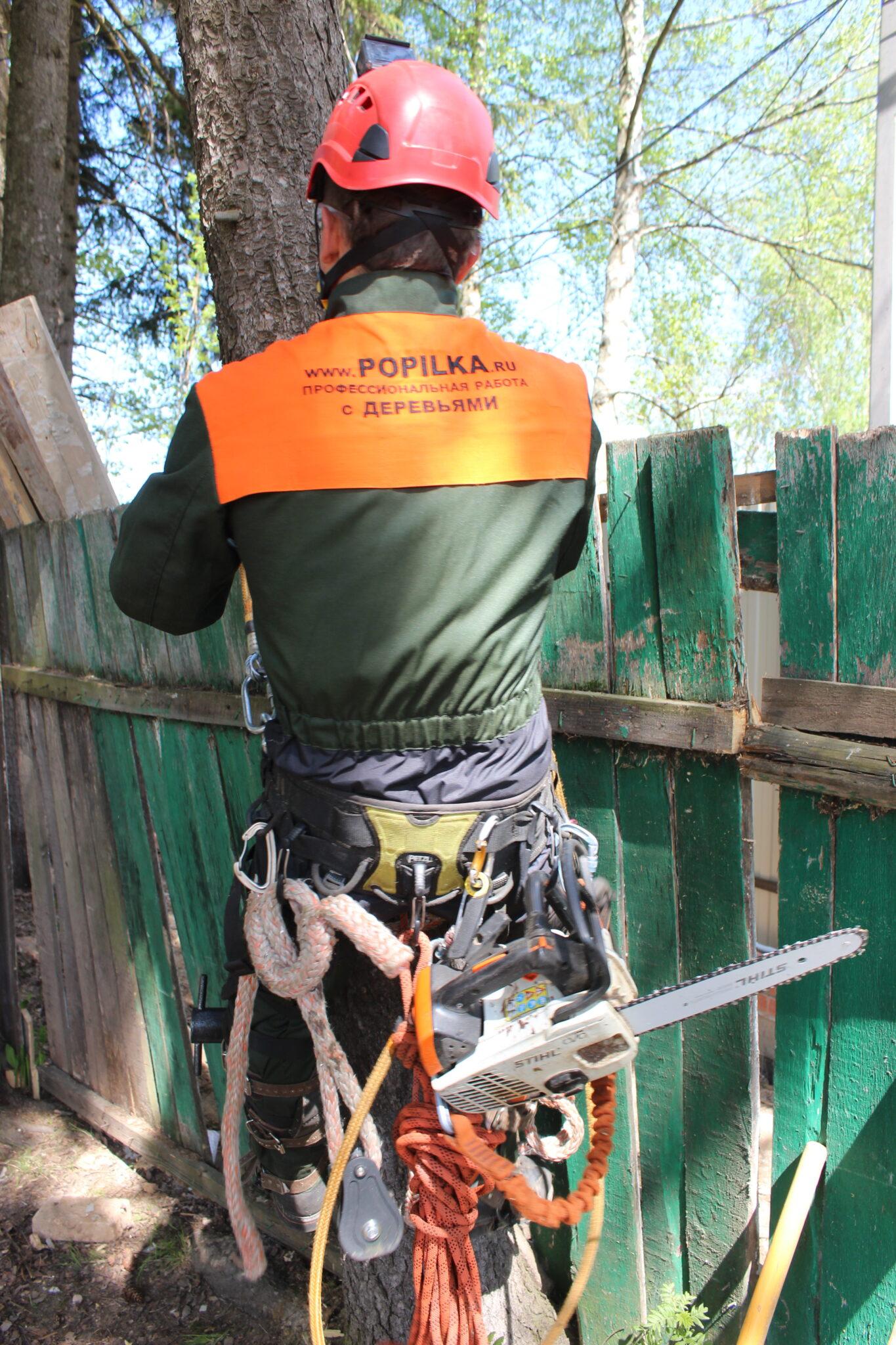 Спил аварийной елки в Семхозе, г. Сергиев Посад, Московская область