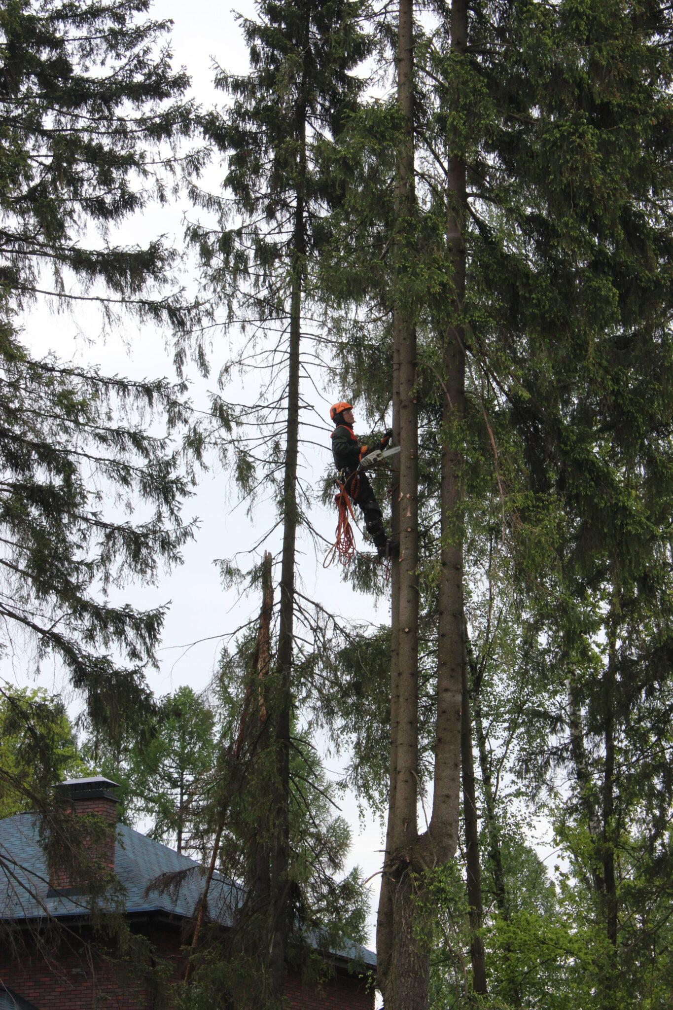 Спилить дерево Пушкино