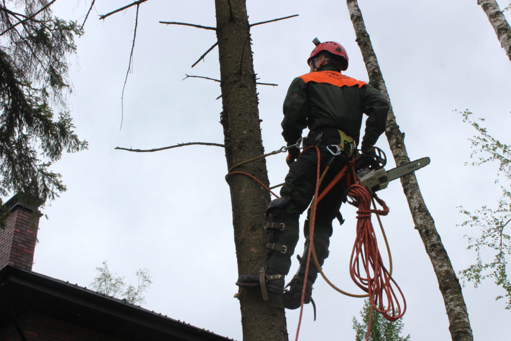 Спилка деревьев Пушкино