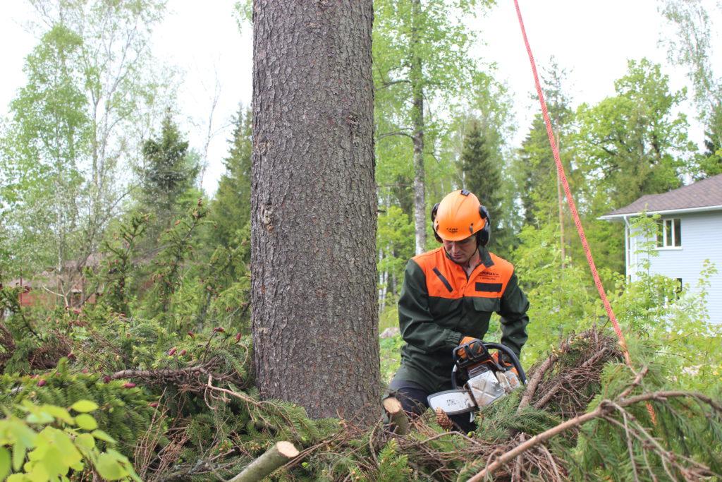 Вырубка деревьев Пушкино