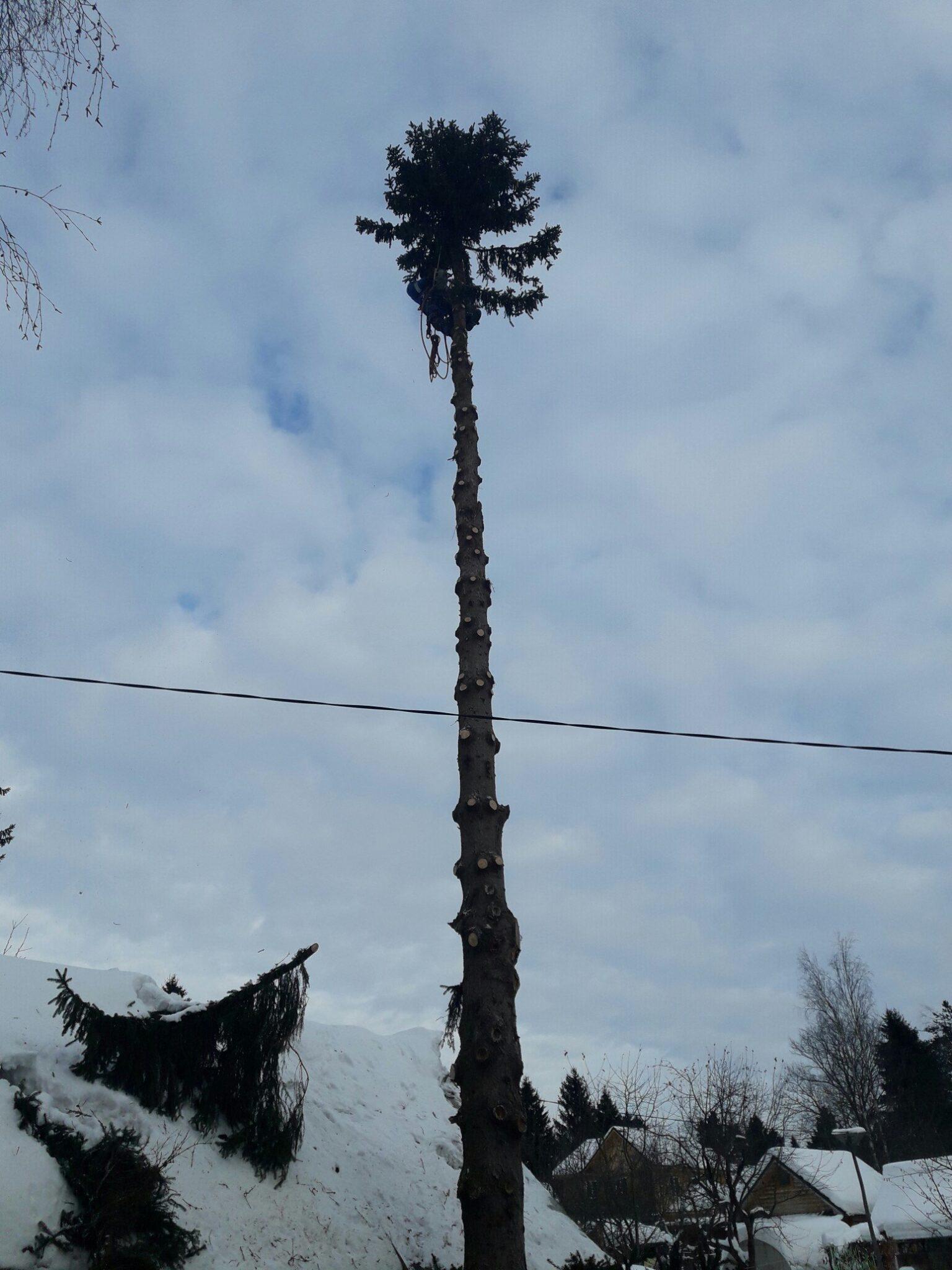Удаление деревьев. Елка СНТ Северянин Сергиев Посад