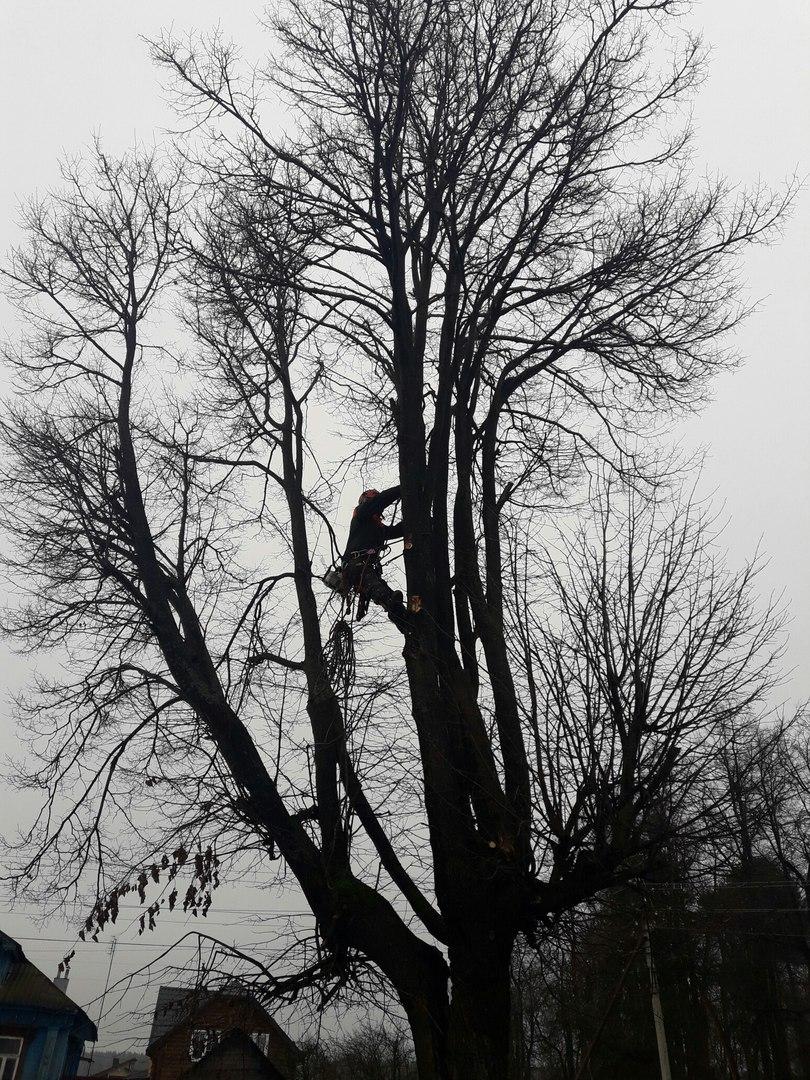 Спилить дерево в Ногинске. Спиливание аварийной липы