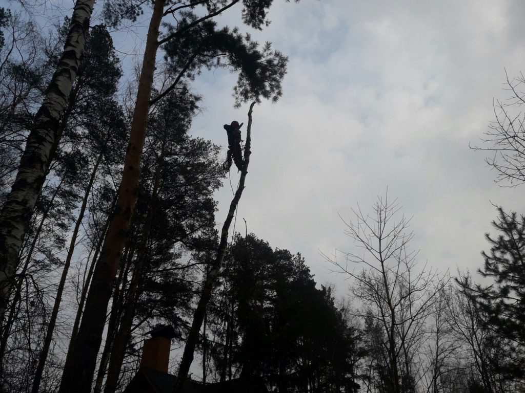 Спилить дерево и удалить пень в Усово Одинцовский район