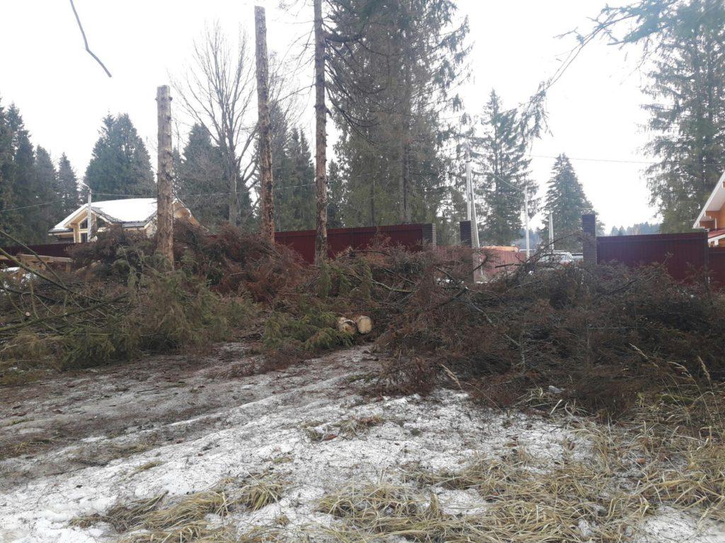Спилить дерево в Струнино, Александровский район, Владимирская область
