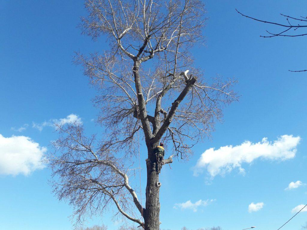Спилить дерево в Москве. Удаление старого тополя среди гаражей в Медведково
