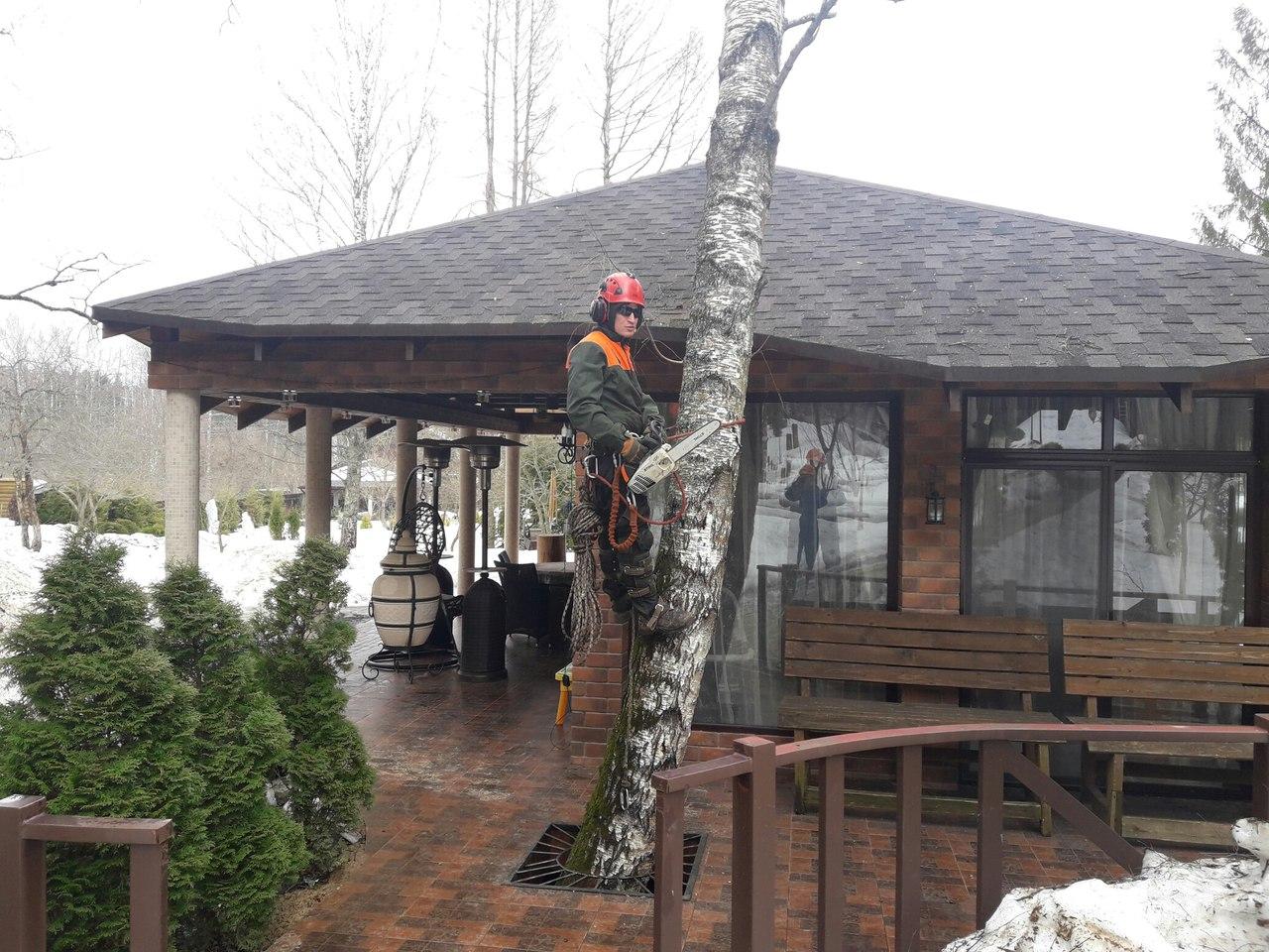 Спилить дерево. Спиливание сухой березы возле беседки в Абрамцево, Сергиево-Посадский район