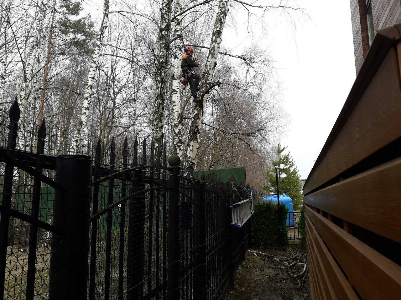 Обрезка деревьев Истринский район