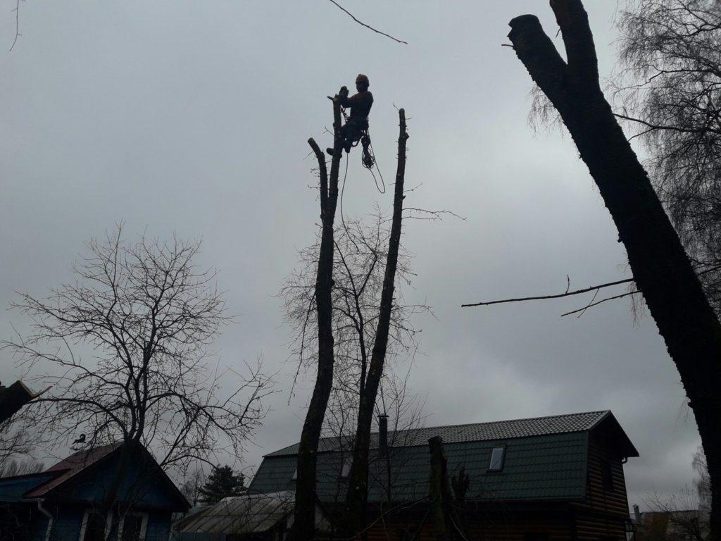 Спилить дерево Софрино Пушкинский район