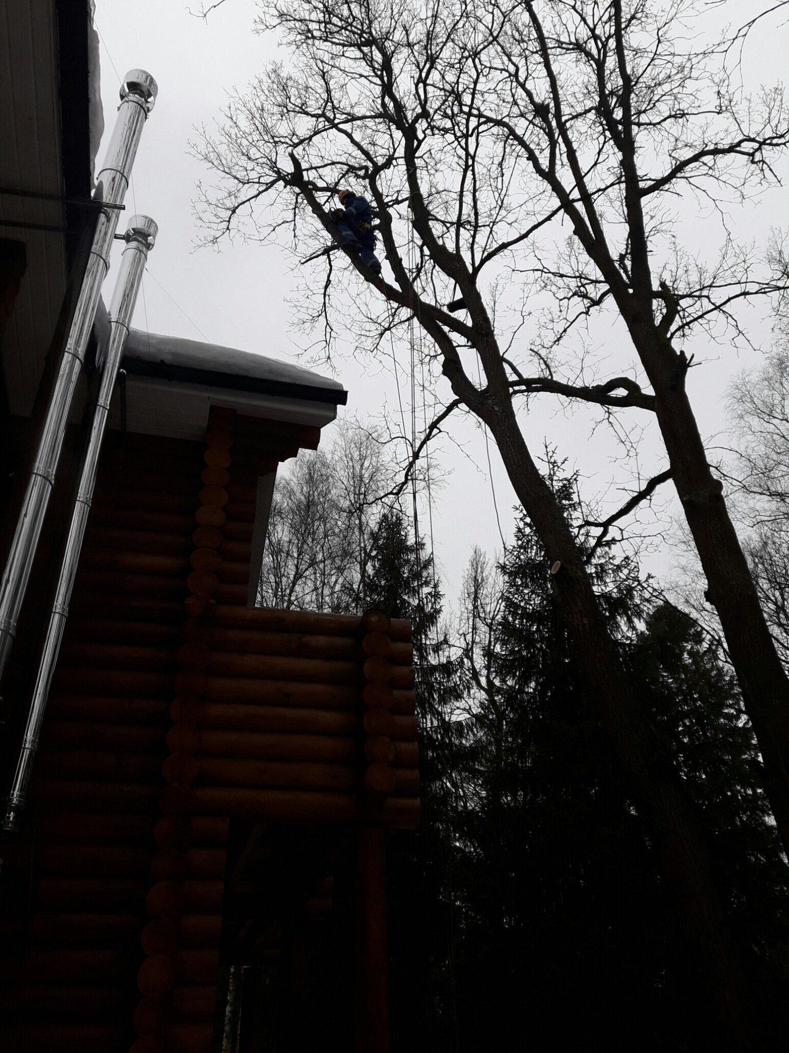 Удаление и обрезка деревьев Дубы Софрино, Пушкинский район
