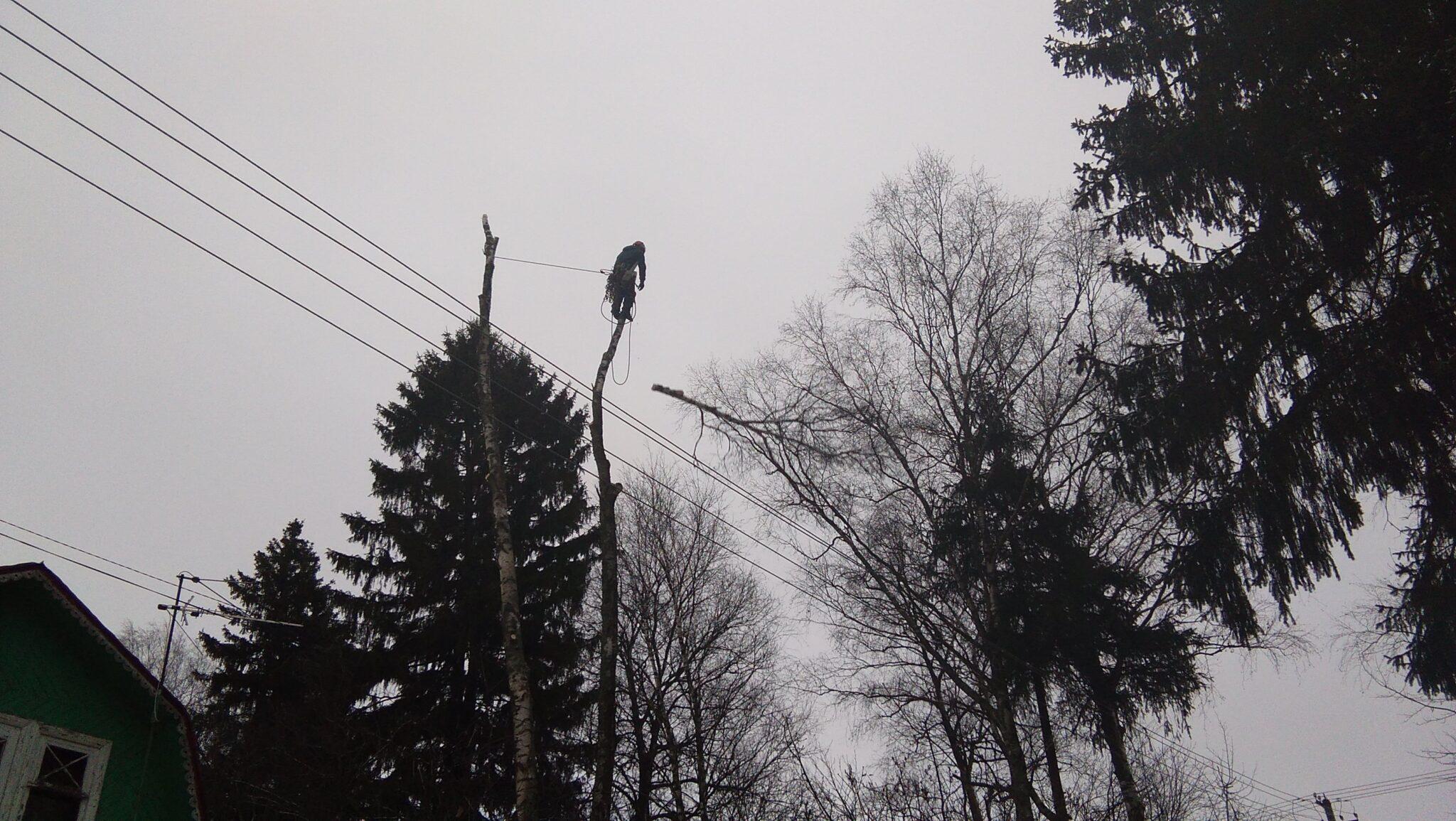 Спиливание 9 деревьев в СНТ Железнодорожник, городской округ Клин, корчевание пней, измельчение веток.