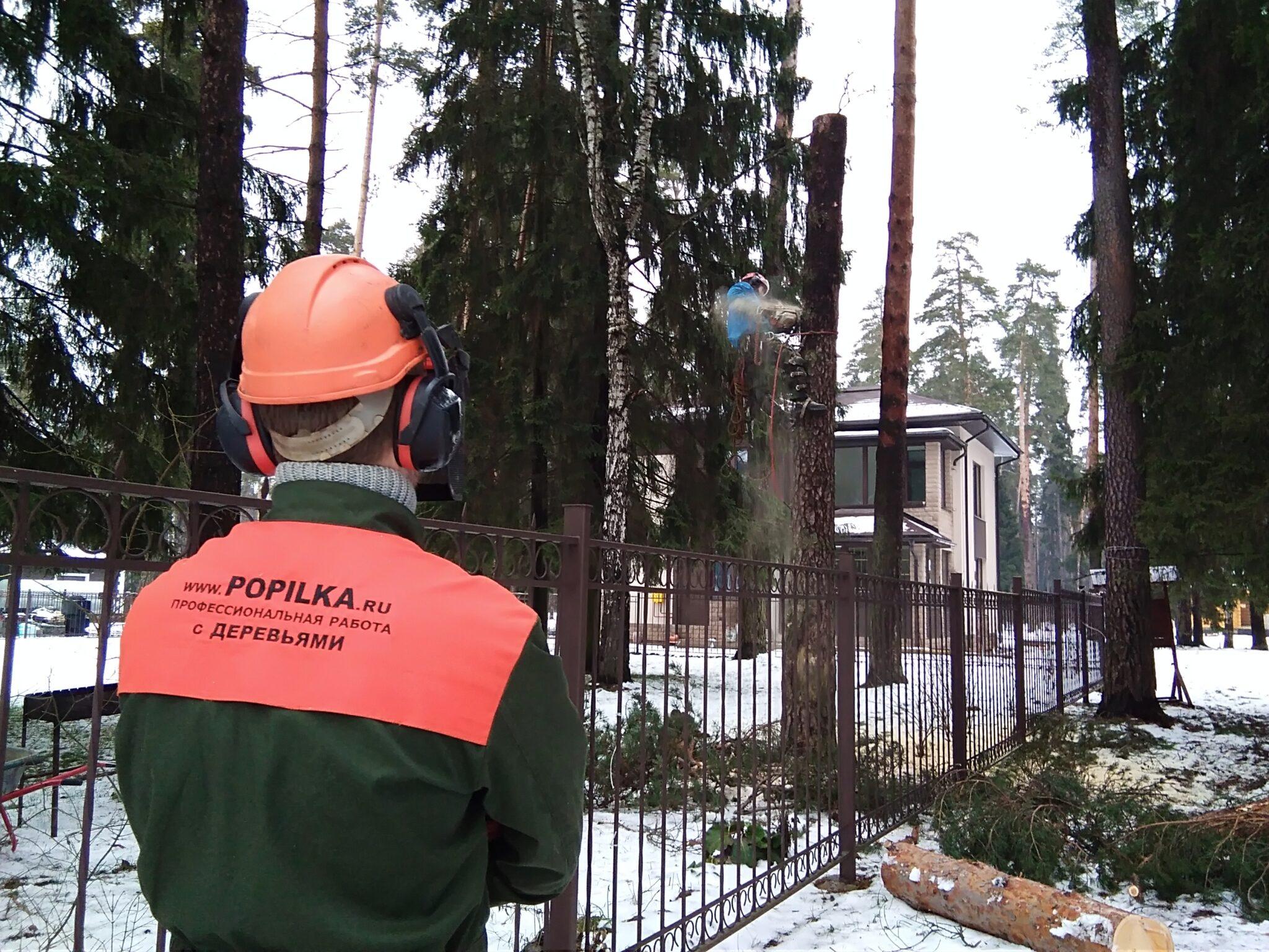 Спиливание 4 деревьев в коттеджном поселке Чистые пруды 3, Пушкинский район, Московская область