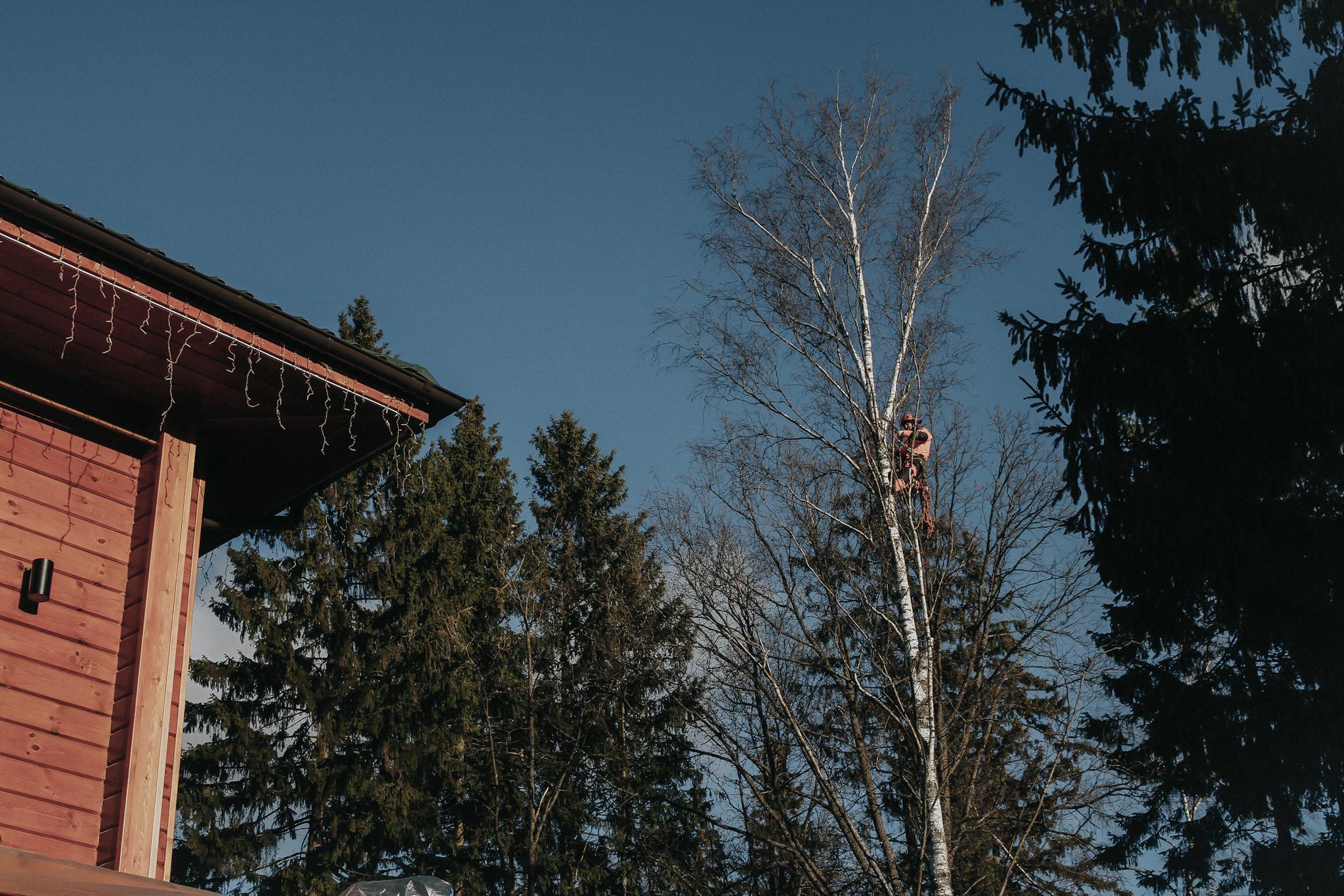 Обрезка макушек на шести деревьях в поселке Аметист, Наро-Фоминский район.