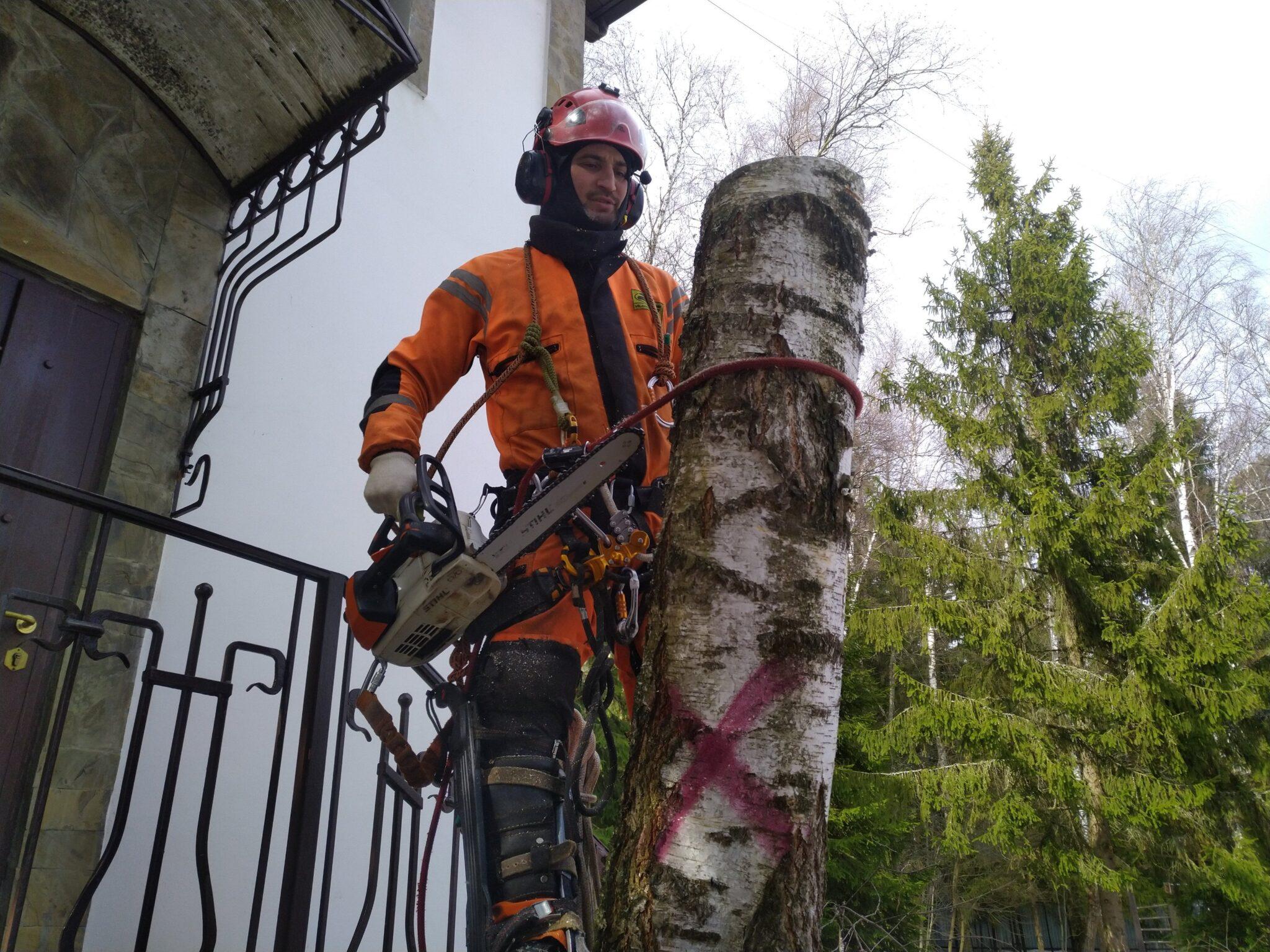 Удаление 6 деревьев с пнями и вывозом порубочных остатков. Одинцово, Московская область