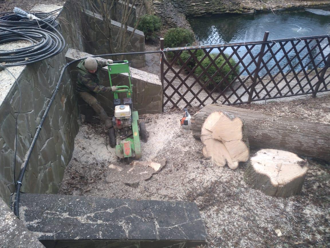 Спиливание двух лип на благоустроенном участке в Поселке Академиков Абрамцево, Сергиево-Посадский г.о.